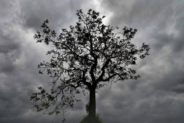 Mythe du peuple de l'arbre